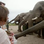 Feeding the Knysna Elephants and other great things to do in Knysna