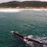 Beachscape, Keurboomstrand, Plettenberg Bay, Whale watching