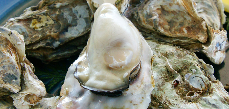 knysna_oyster_festival