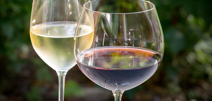 plett_wine_festival