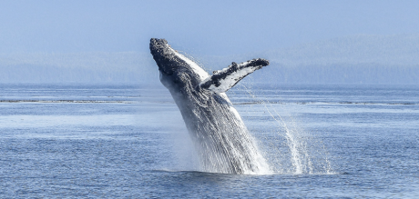 knysna_whale_watching