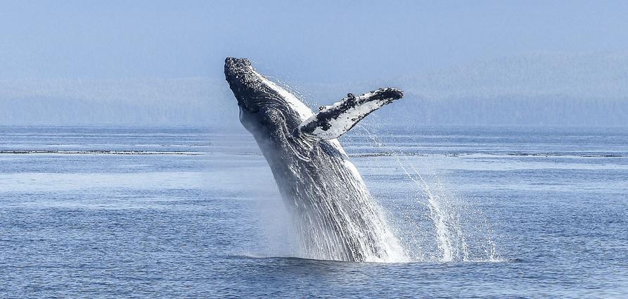 knysna_whale_watching