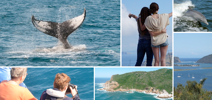Whale watching in Knysna: spot Humpback whales (May to December) and Bryde's whales (all year round).