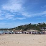 Penguin release Lookout beach Plett