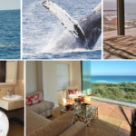 Best whale watching spots in South Africa are from these holiday rentals!