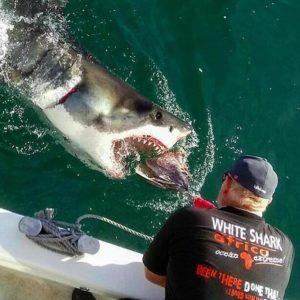 Shark Experience - White Shark Africa
